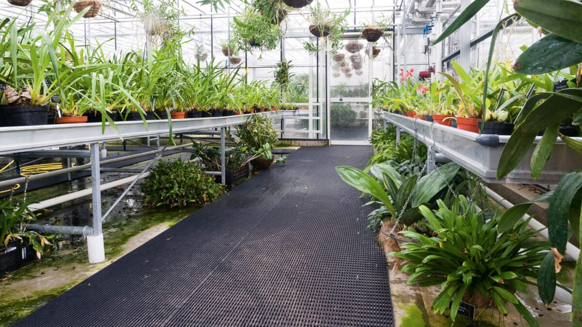 Vynagrip non-slip mat prevents visitors to RHS garden greenhouse nurseries from slipping on wet walkways